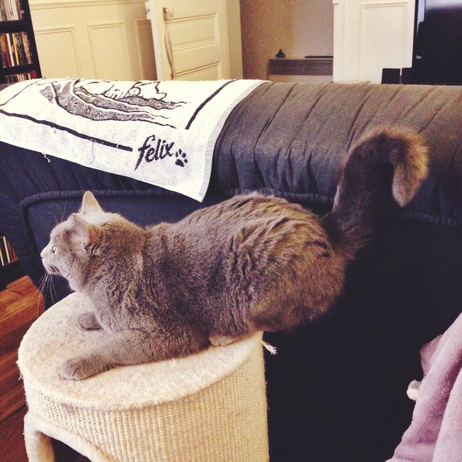 La position très distinguée de mon chat