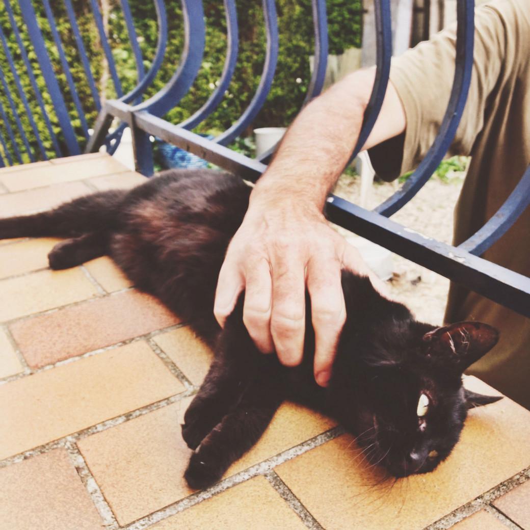 Luna, l'autre chat