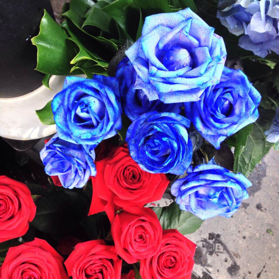 Des roses bleues