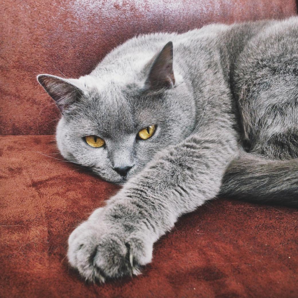 Le chat tout gris