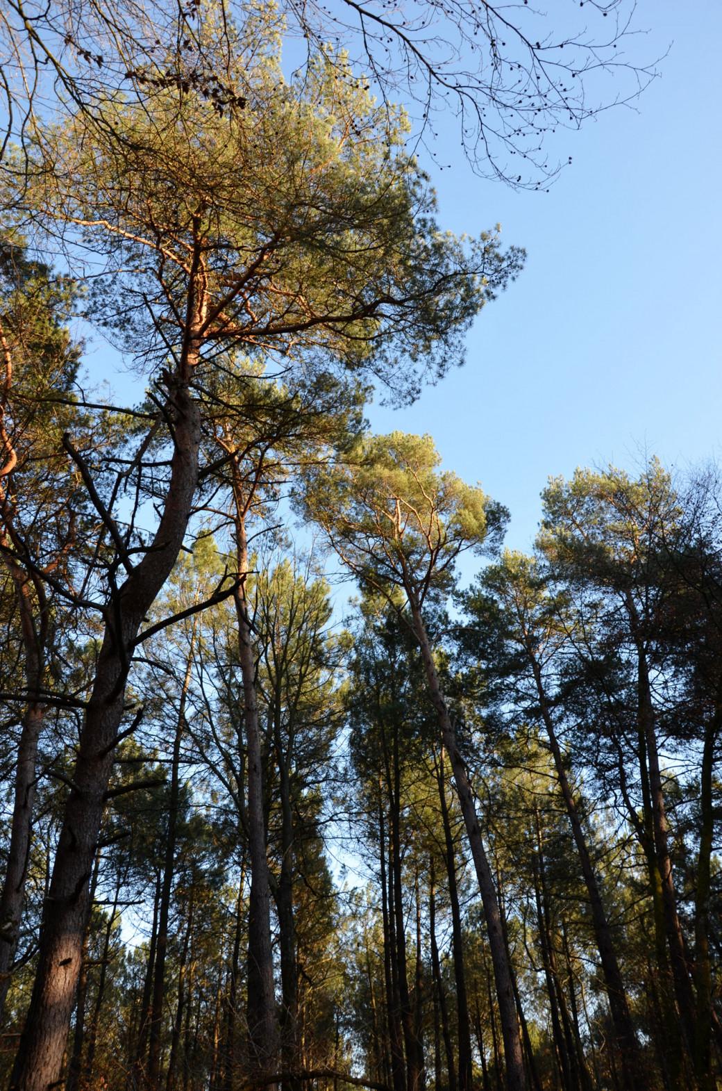 Sortie en forêt bretonne