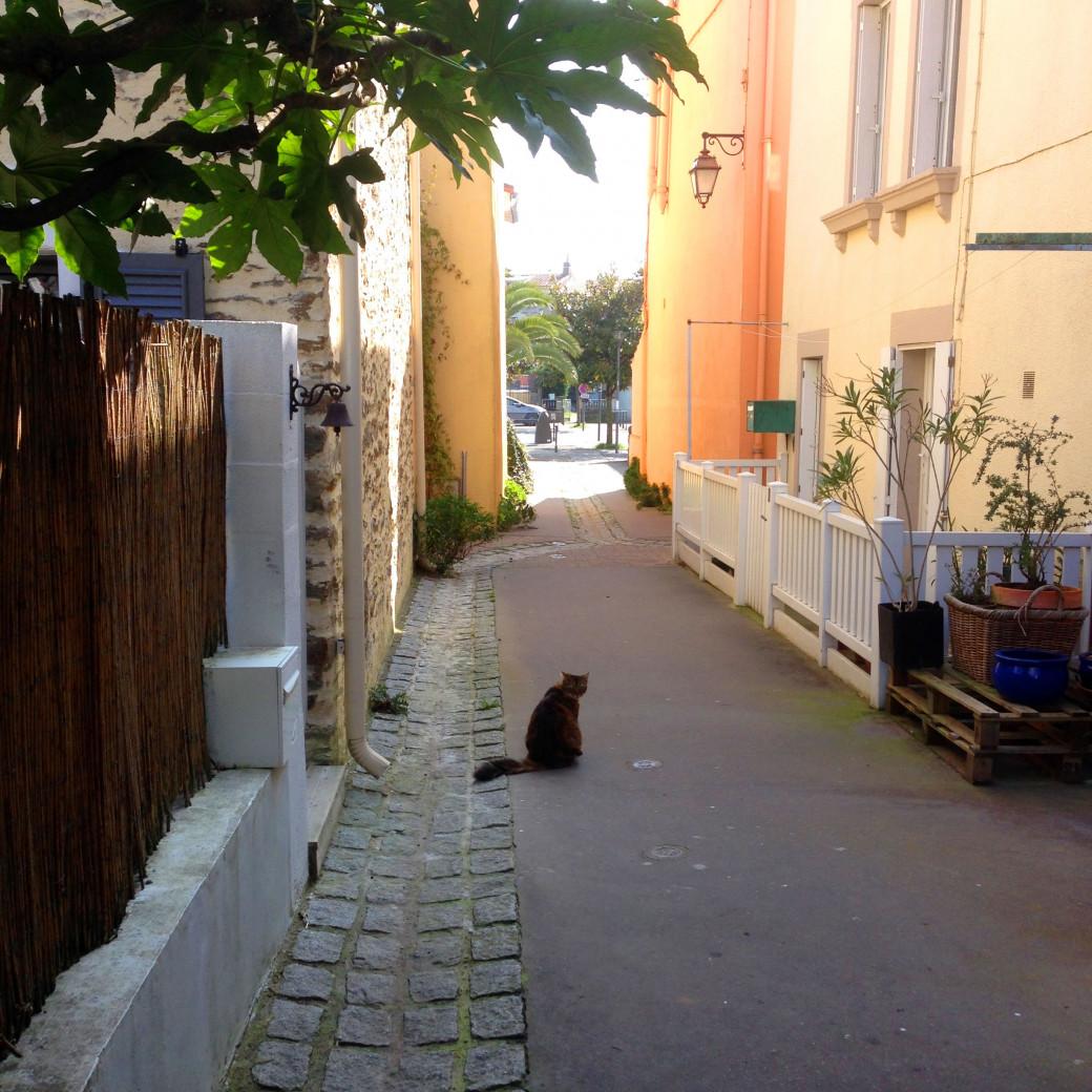 Le chat qui nous snobait