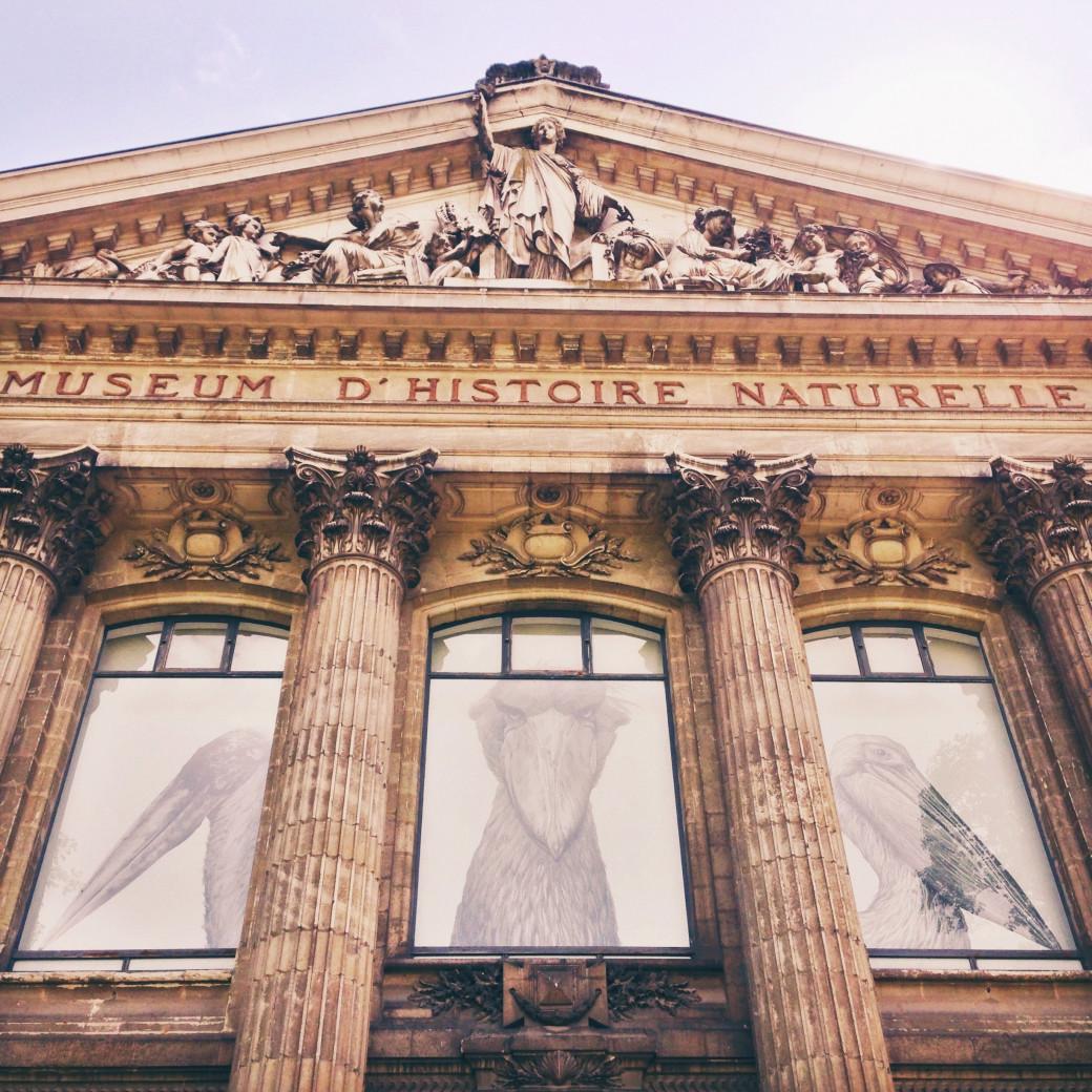 Museum d'histoire naturelle de Nantes