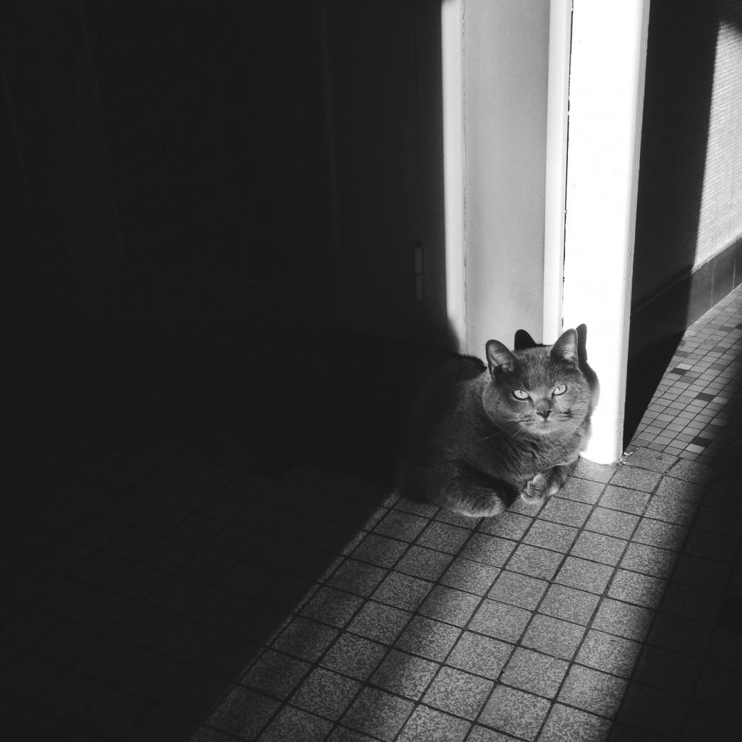 Mon rayon de soleil gris ♥︎