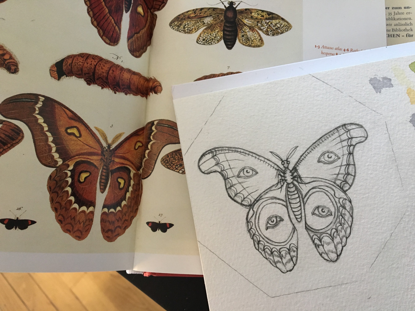 Papillon (3)