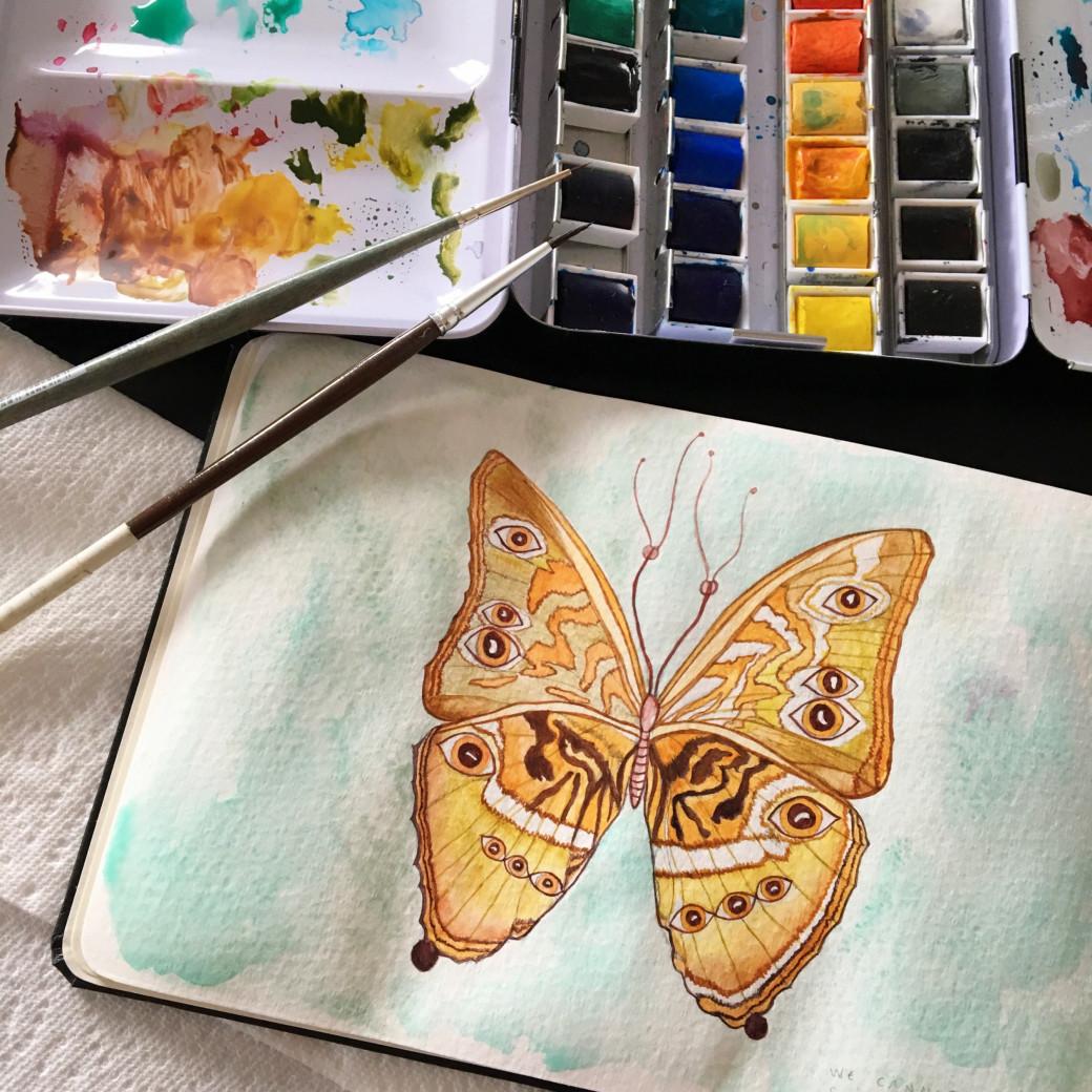 Papillon doré (3)