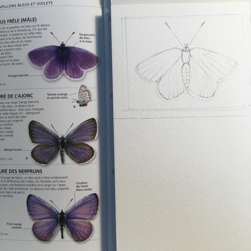 Papillon violet (1)
