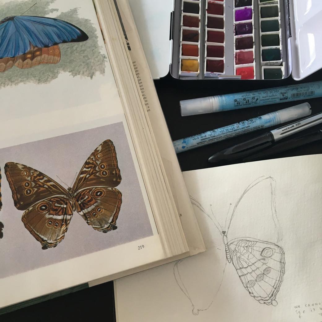 Papillon doré (1)