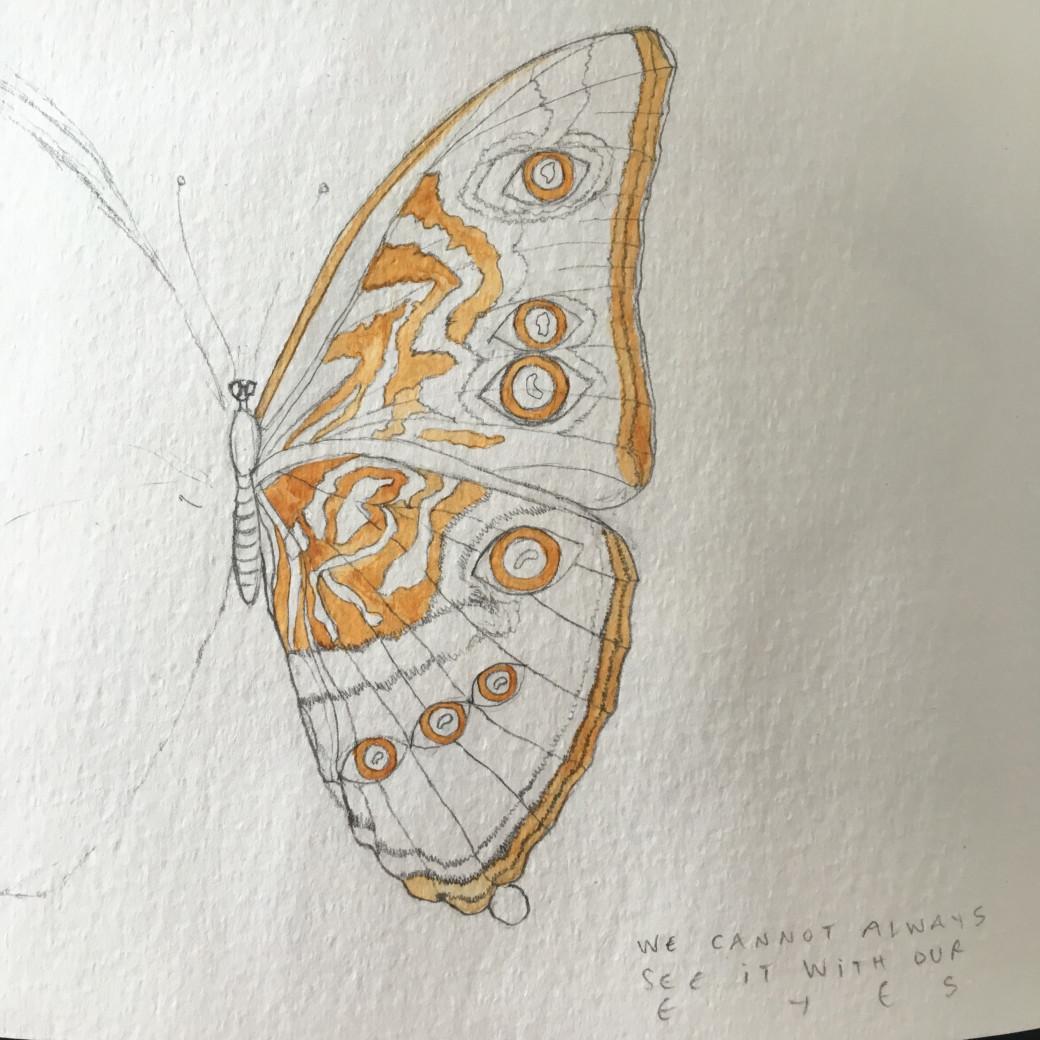 Papillon doré (2)