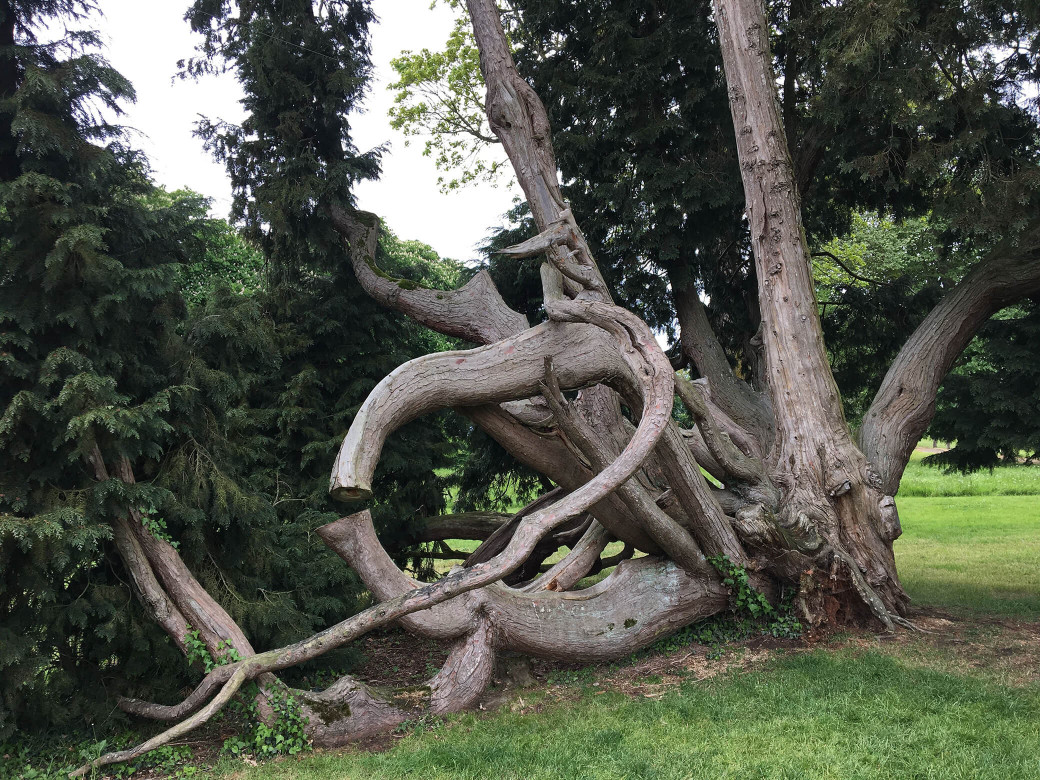L'arbre remarquable du parc du château de Combourg