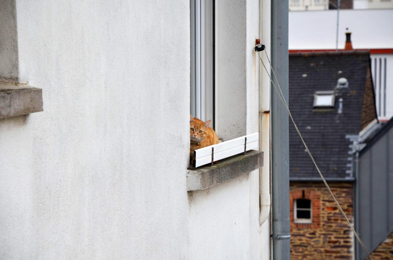 Le chat beaucoup trop mignon de nos voisins