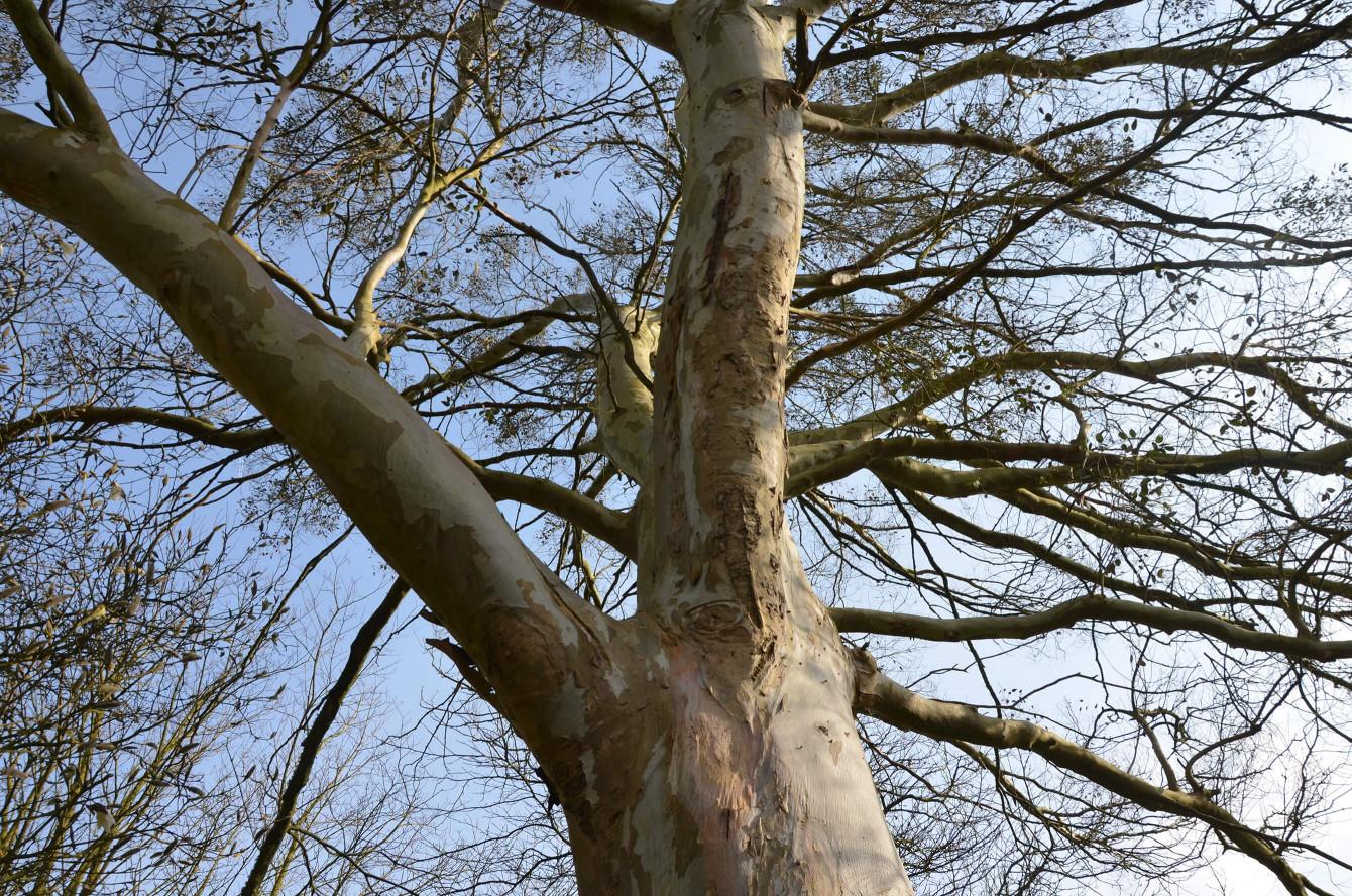 L'arbre à yeux