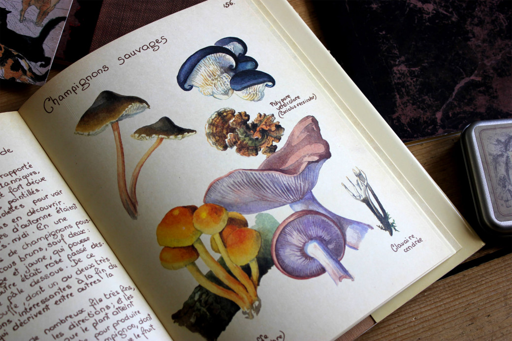 Champignons illustrés par Edith Holden